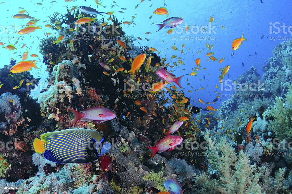 Tropical Coral Reef,Red sea. stock photo