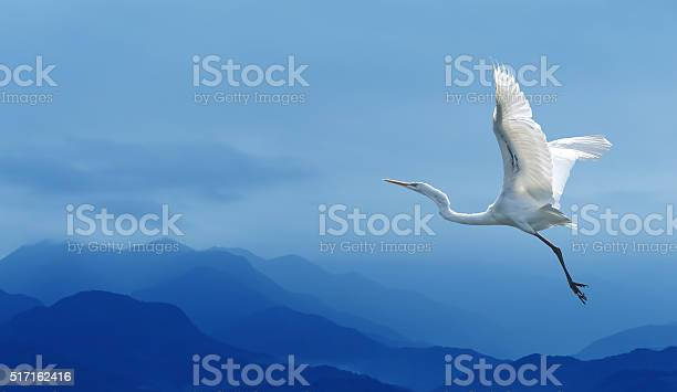Tropical crane over blue sky picture id517162416?b=1&k=6&m=517162416&s=612x612&h=c9nto7qjnh3fdaktz1a3ddhoqozzcdxj3yqfl4l5v u=