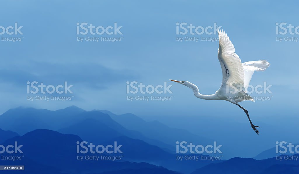 Tropical crane over blue sky stock photo