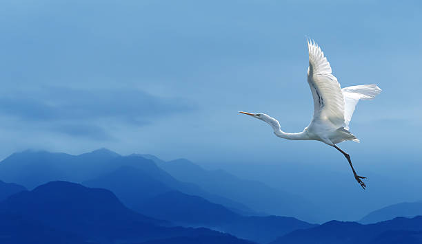 tropical crane over blue sky - crane bird stock pictures, royalty-free photos & images