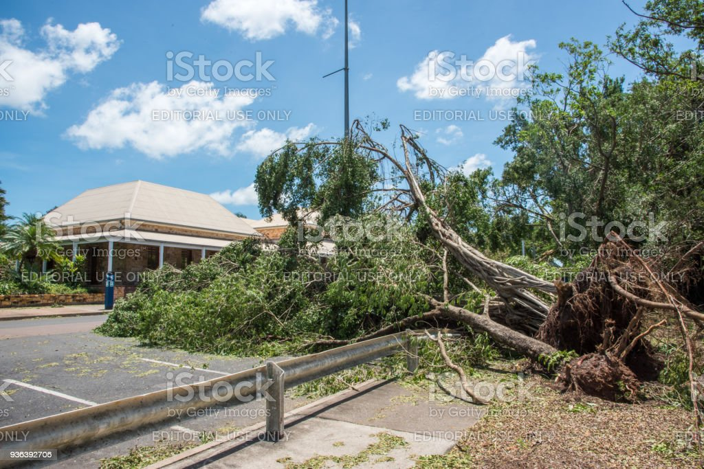 Tropical Cyclone: Uprooted Tree stock photo