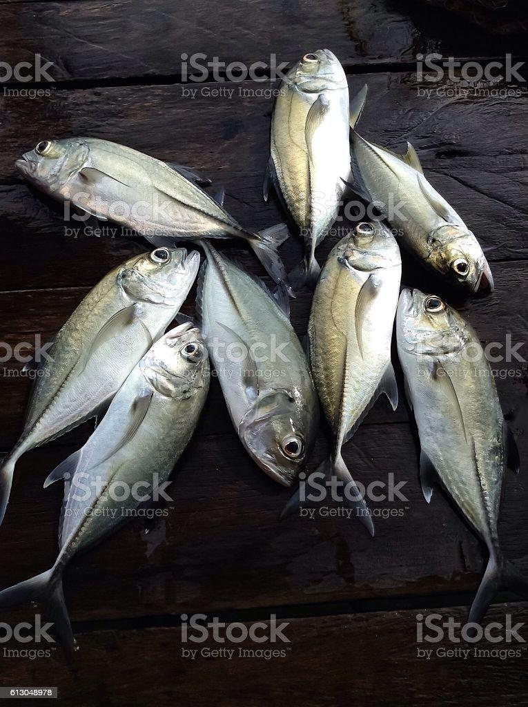 Tropical deep sea fish stock photo