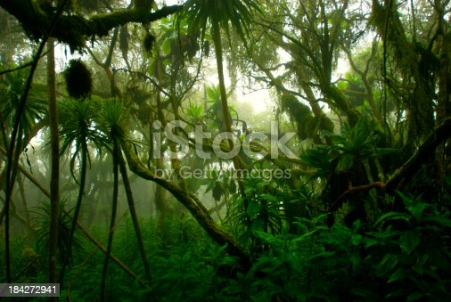 istock tropical dense cloud forest coverd in fog, Central Africa 184272941