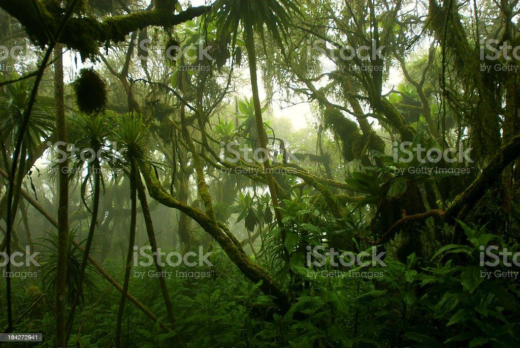 Tropische dichten cloud forest coverd in Nebel und Zentralafrika – Foto