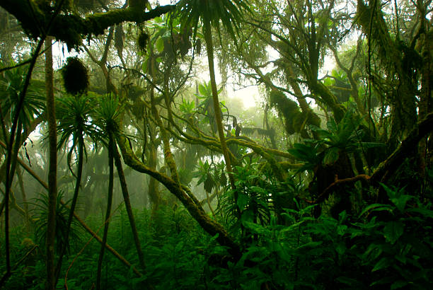 tropical denso cloud forest coverd en niebla, África Central - foto de stock