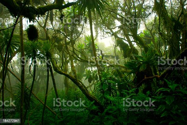 tropical dense cloud forest coverd in fog, Central Africa