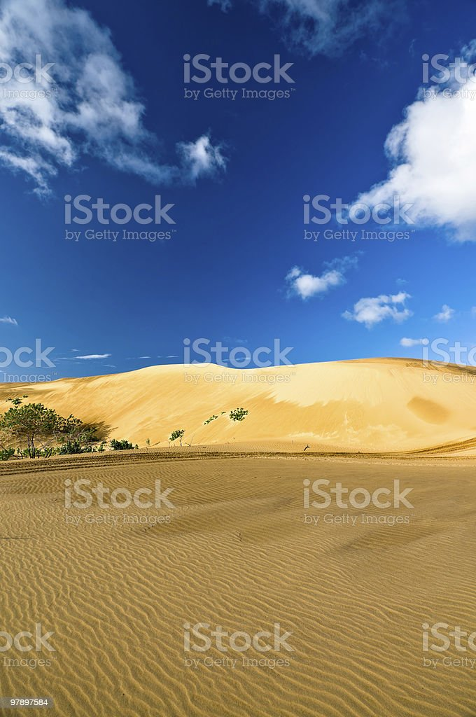 Tropical Desert royalty-free stock photo