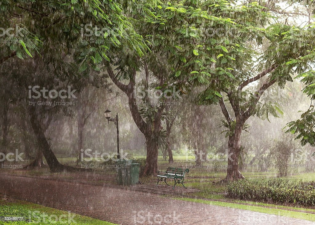 tropical downpour in the park of Thailand stock photo