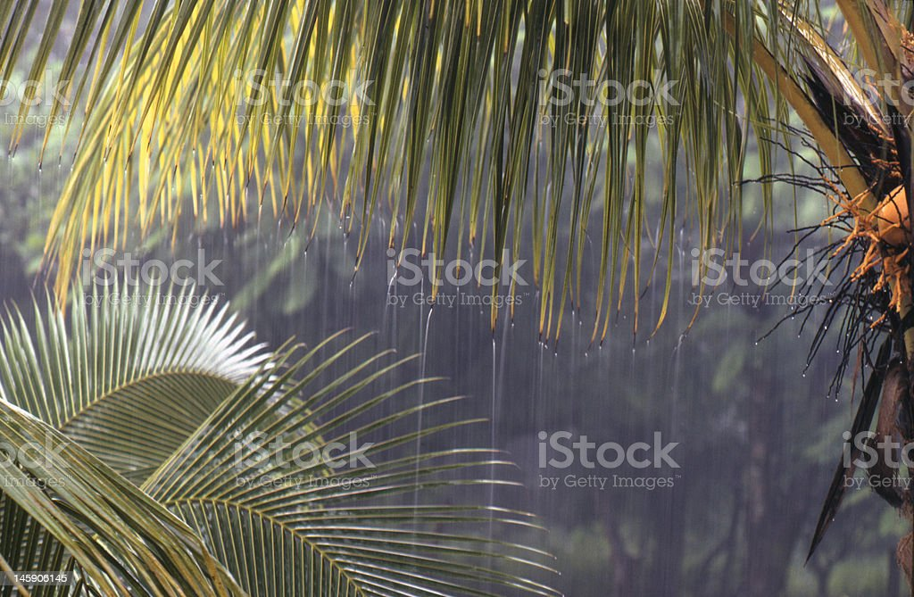 Tropical downpour stock photo
