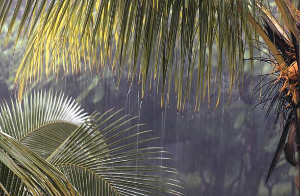 Tropical downpour stock photo