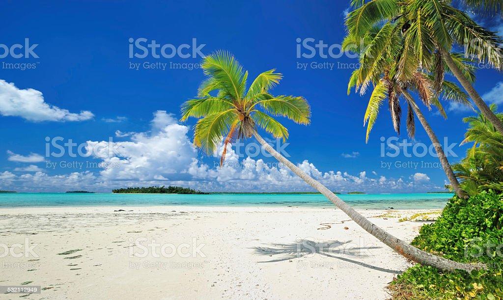 tropical dream beach stock photo