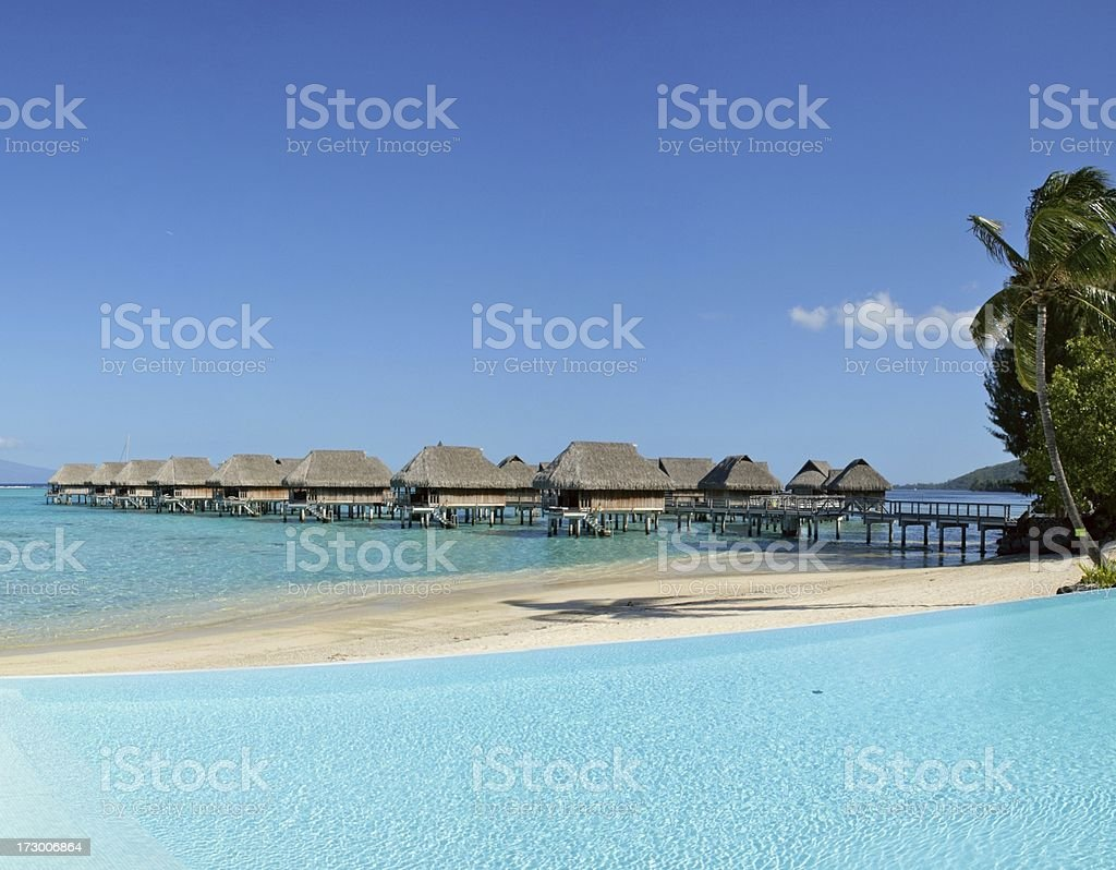 Tropical Dream (XL) royalty-free stock photo
