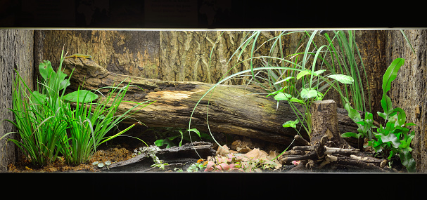Tropical environment terrarium layout with exotic greens and a log