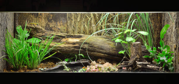 Tropical environment terrarium layout with exotic greens and a log stock photo