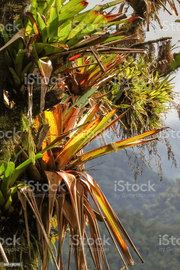 Tropical epiphyte on a tree stock photo
