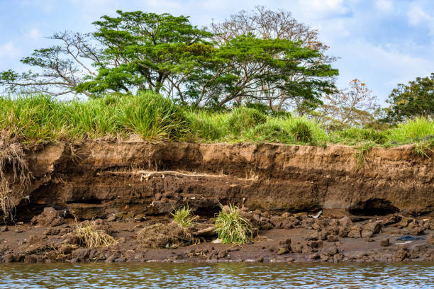 Tropical Erosion Riverbank erosion in lush tropical landscaper, Tarcoles River, Costa Rica riverbank stock pictures, royalty-free photos & images