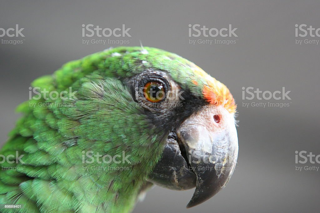 Tropical & Exotic Birds royalty-free stock photo