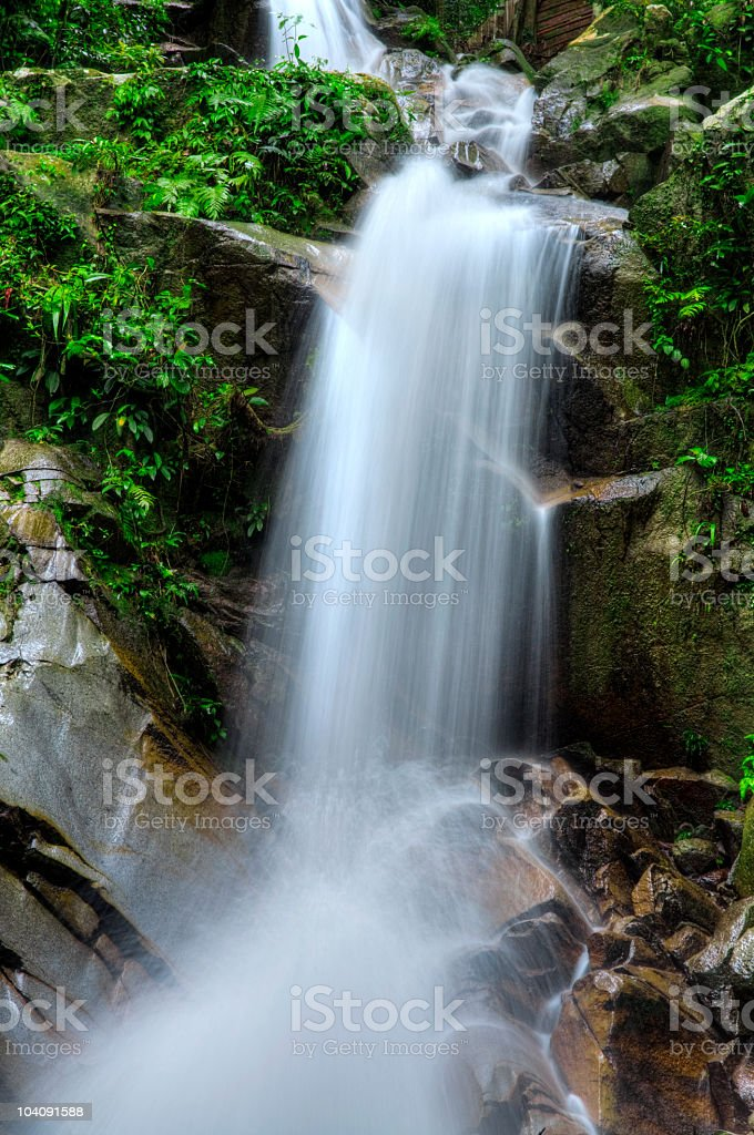 Tropical fall royalty-free stock photo