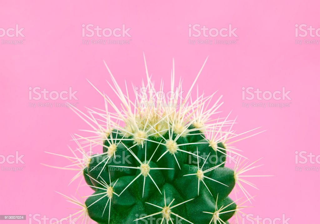 Tropical fashion cactus on pink paper background. Trendy minimal pop art style and colors.