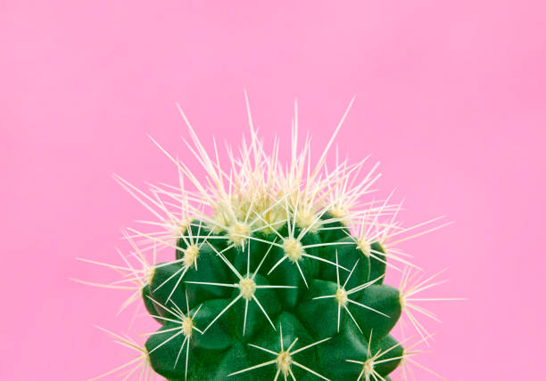 Tropical fashion cactus on pink paper background. Trendy minimal pop art style and colors. stock photo