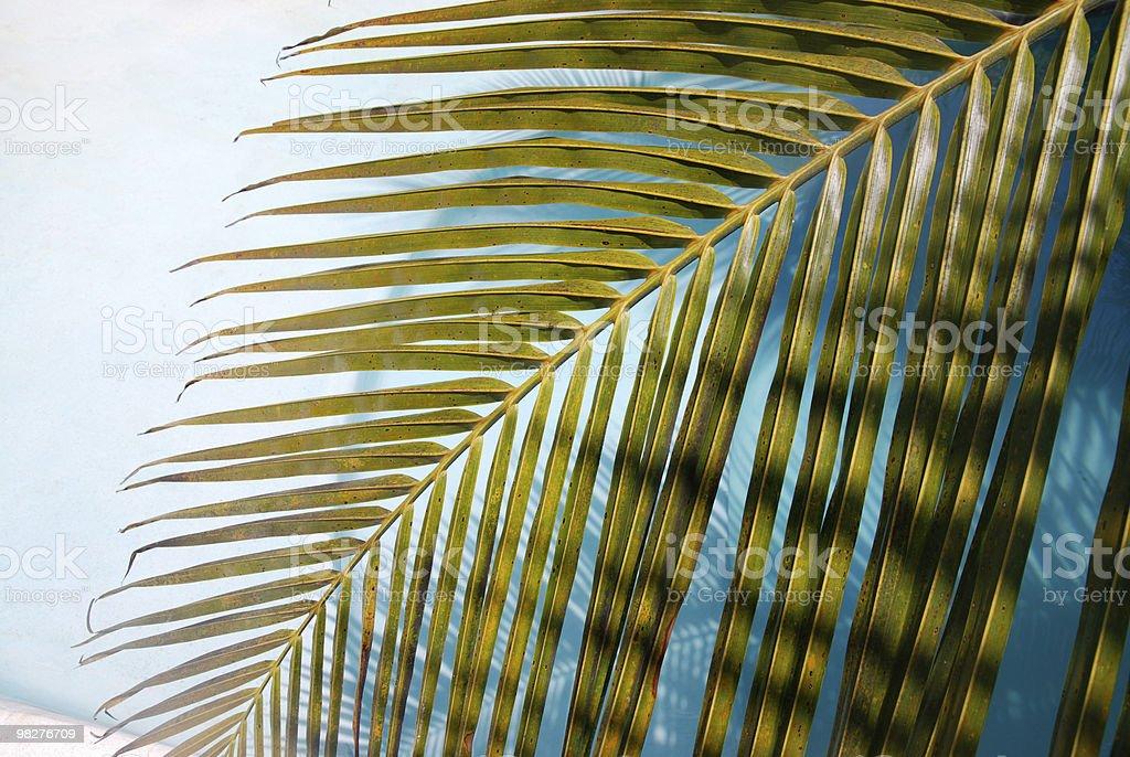Sensazione tropicale foto stock royalty-free