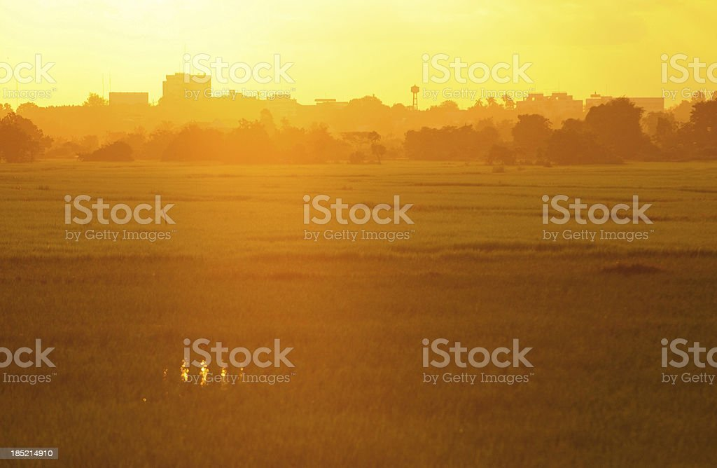 Tropical field landscape at sunset royalty-free stock photo