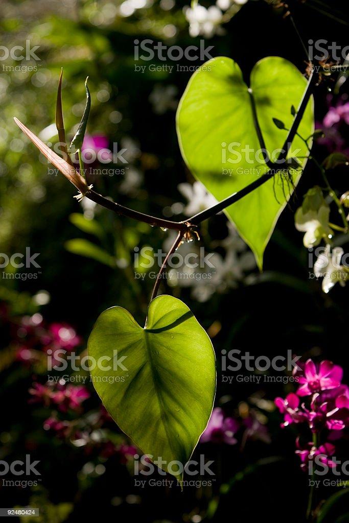Tropical Fijian plant life royalty-free stock photo