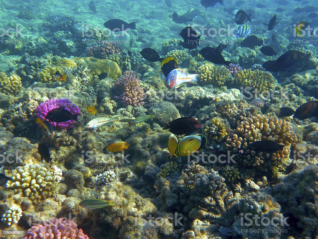 Tropical Fish and Coral Reef in Sunlight royalty-free stock photo