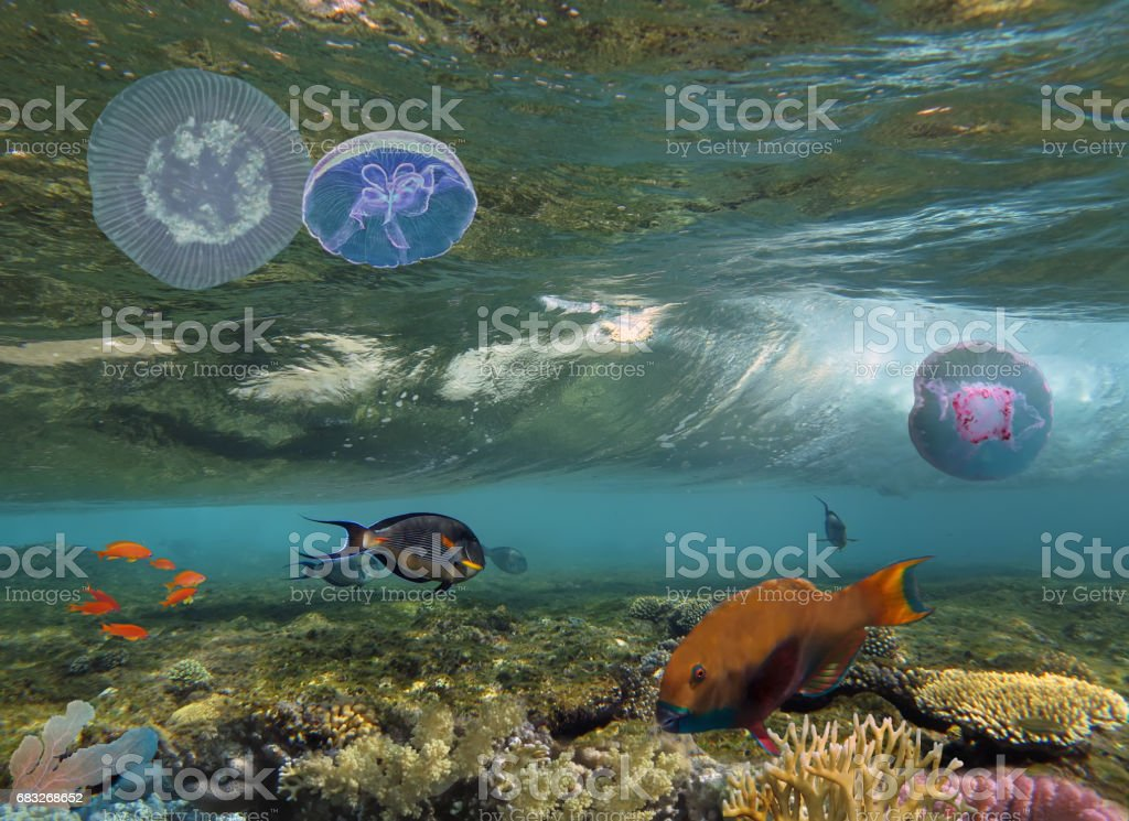 Tropical fish and Hard corals in the Red Sea, Egypt royalty-free 스톡 사진