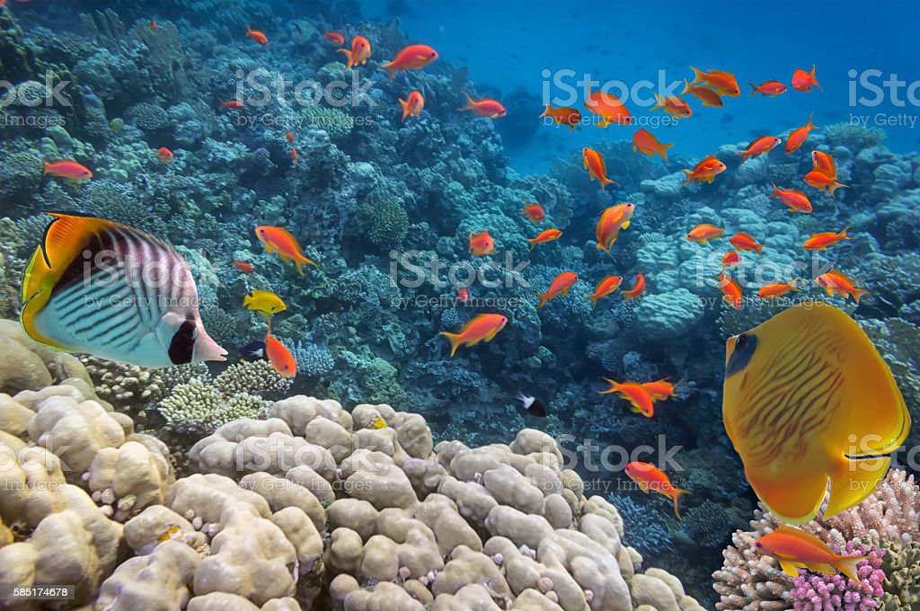 Tropical fish and Hard corals stock photo
