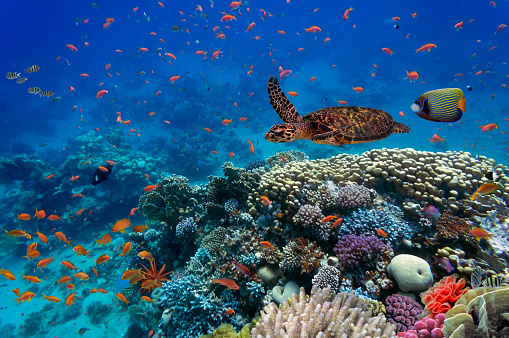 Tropical Fish And Turtle Stock Photo - Download Image Now