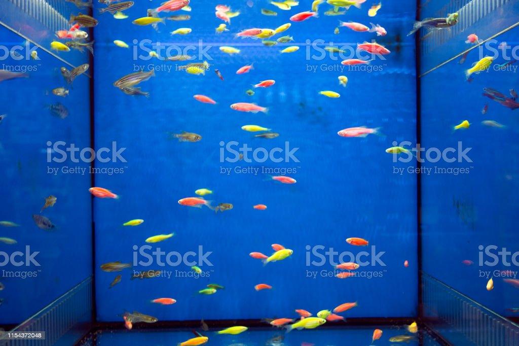 Tropical Fish Aquarium Penguin Tetra And Neon Stock Photo Download Image Now Istock