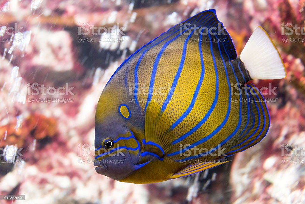 tropical fish at Rayong aquarium, Thailand stock photo