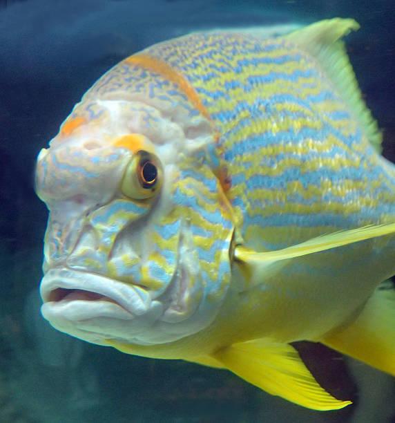 Tropical fish closeup stock photo