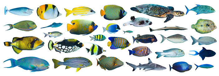 collection of tropical fishes on white background