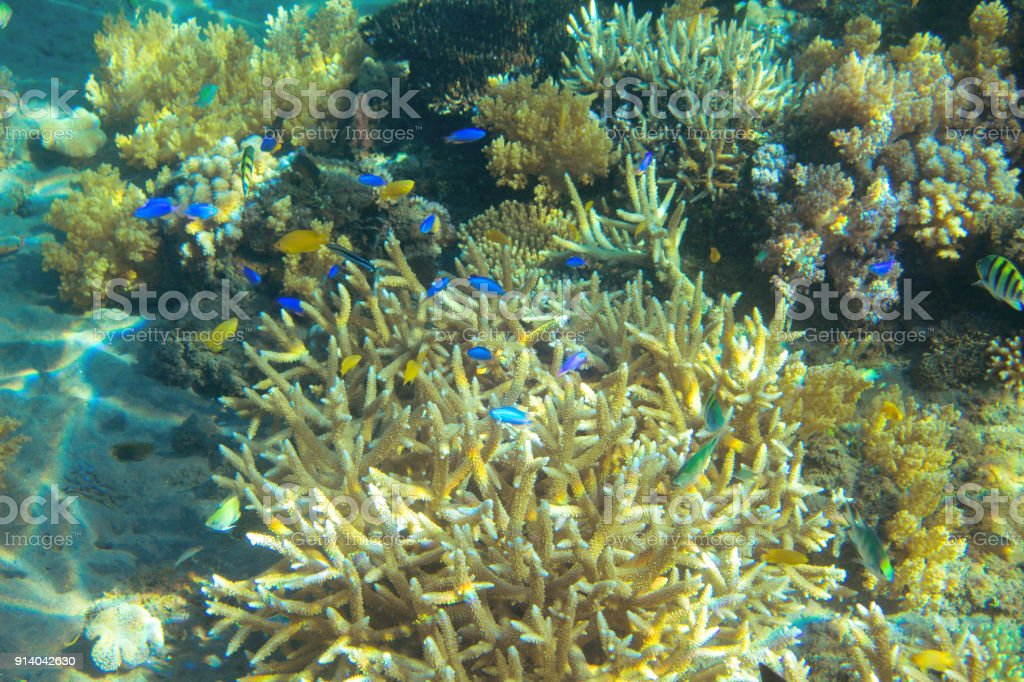 Tropical fish colony in coral. Tropical seashore animal underwater...