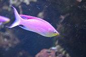 Tropical fish in aquarium in Berlin