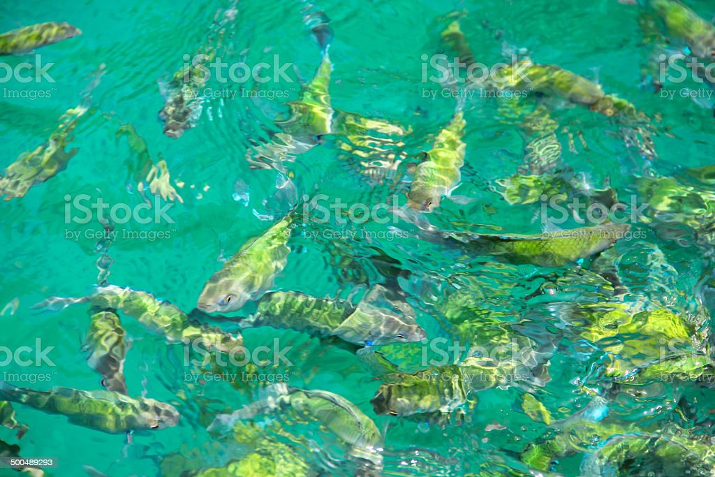 Tropical Fish in water royalty-free stock photo