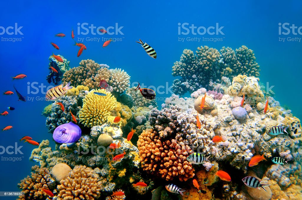Tropical Fish on a coral reef royaltyfri bildbanksbilder