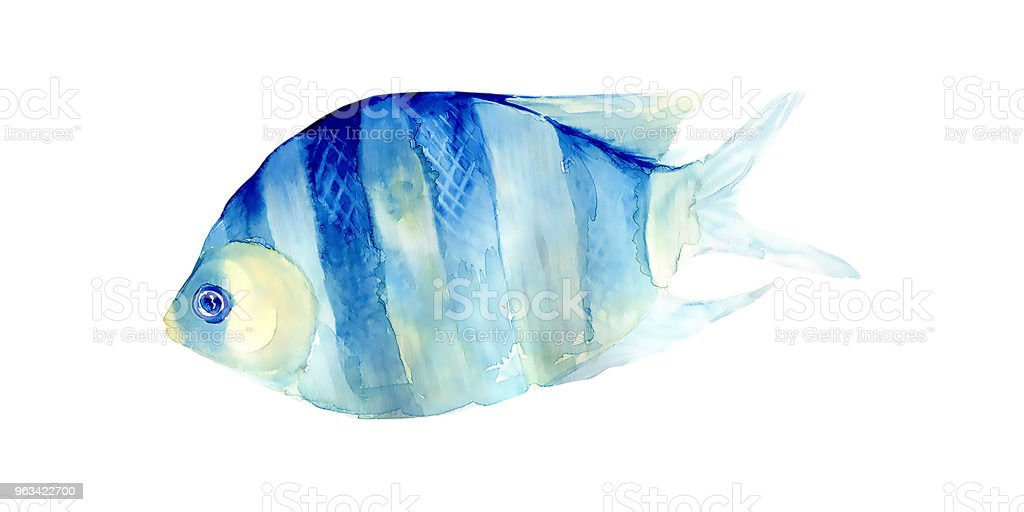 Tropical fish on a white background.Watercolor painting - Zbiór zdjęć royalty-free (Abstrakcja)