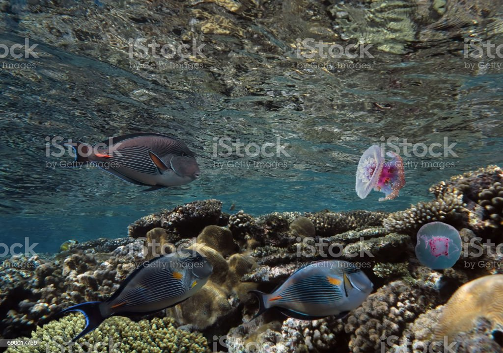 Tropical fish on background of a coral reef stock photo