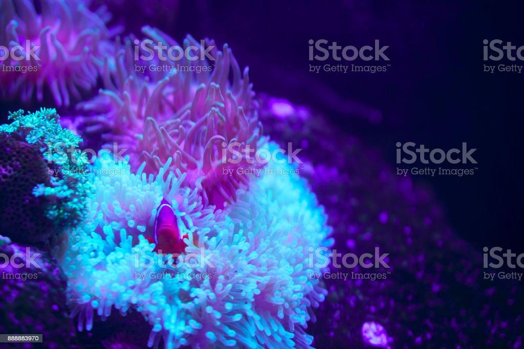 Peces tropicales, los arrecifes de Coral - foto de stock