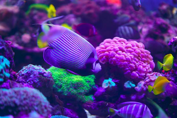 tropical fish on coral reef - barriera corallina foto e immagini stock