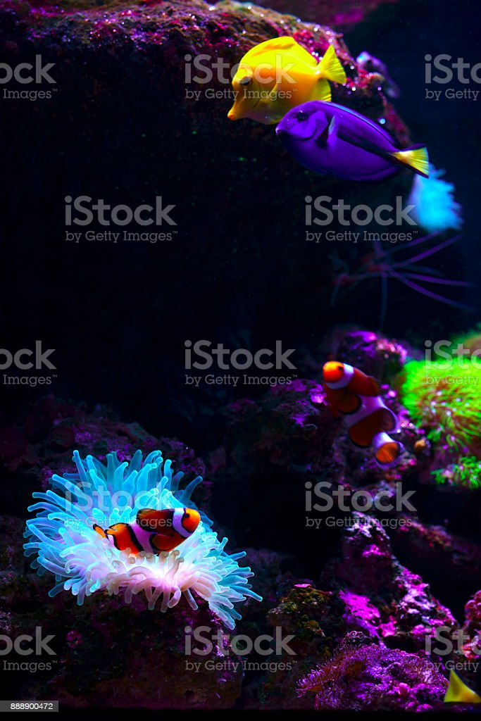 Tropical Fish on Coral Reef stock photo