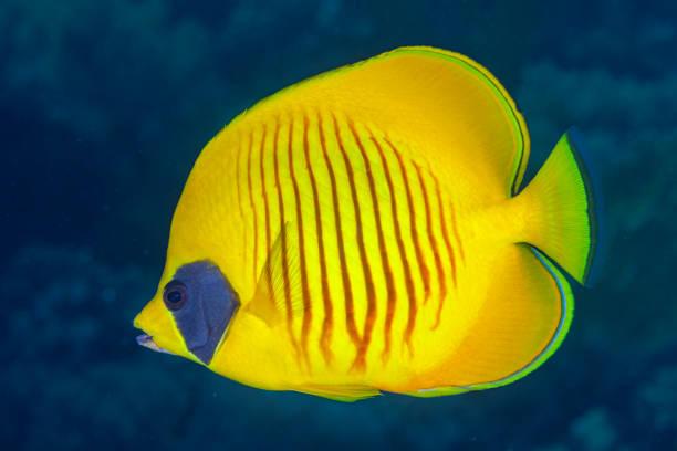Tropical Fish stock photo