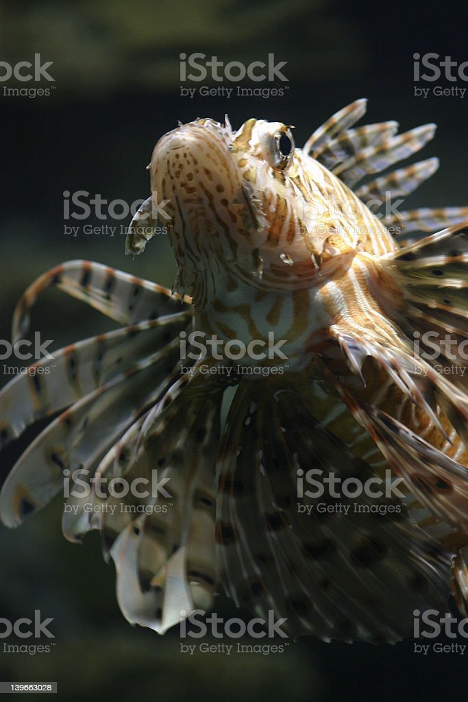 Tropical Fish royalty-free stock photo