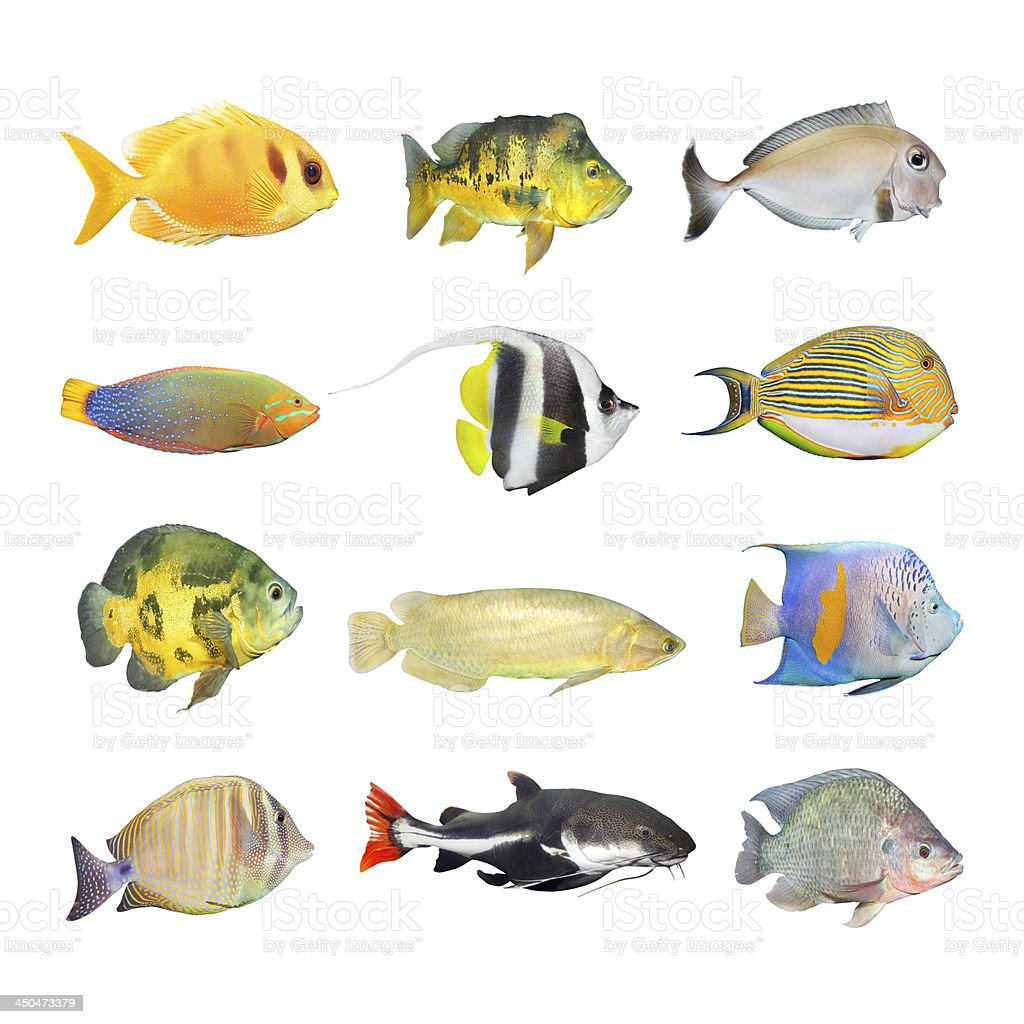 Tropical fish. stock photo