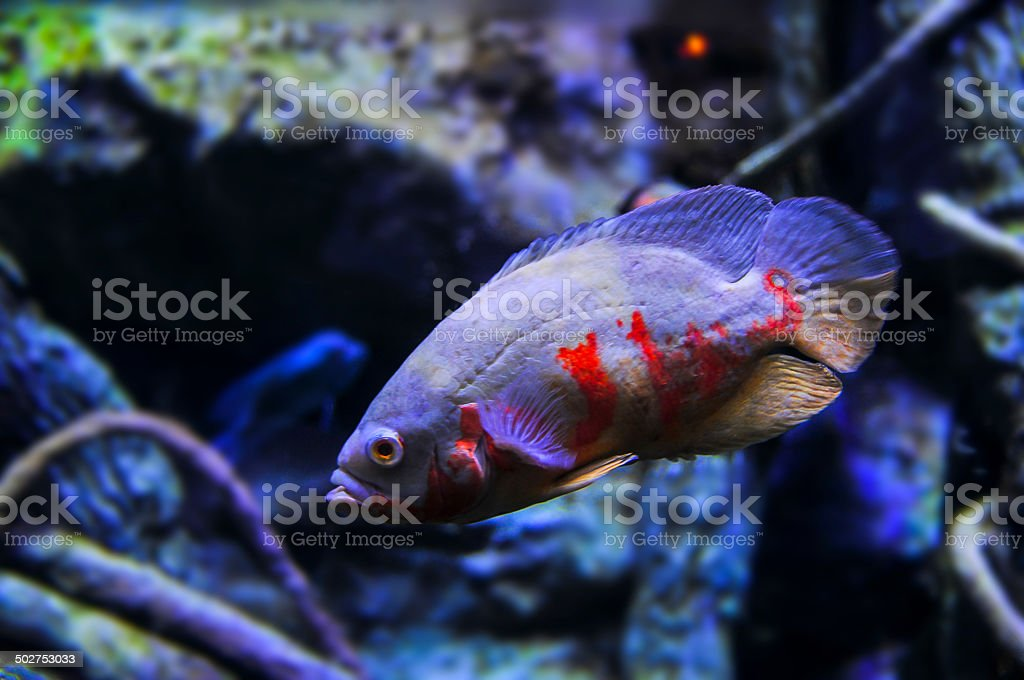 tropical fish stock photo