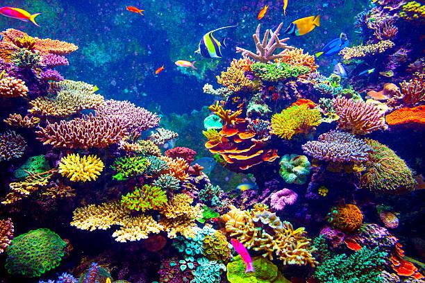 pesce tropicale - barriera corallina foto e immagini stock