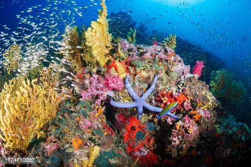 Tropical fish swimming around a healthy, colorful coral reef